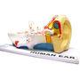 Scientific Educational Model Of Human Ear